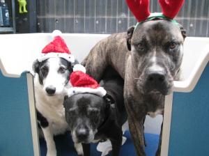 Maisy, Max and Eli